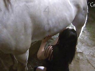 White Stallion 002