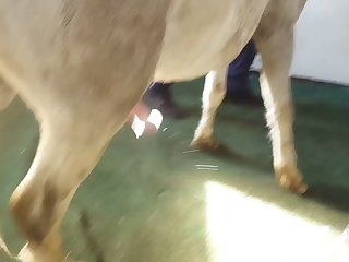 Horse Creampies And Floods Woman's Pussy With Cum