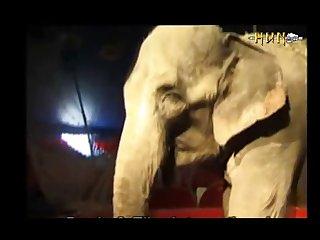 Elephant 1 (part 4)