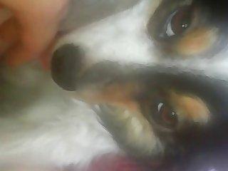 Interracial Amateur Dog Porns #9